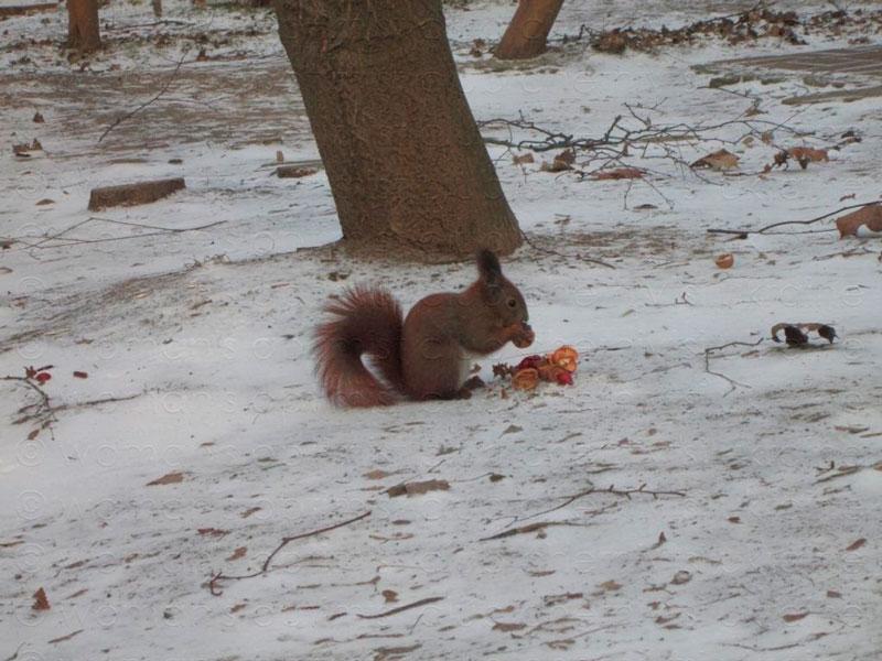 у-природи-немає-поганої-погоди-або-зима